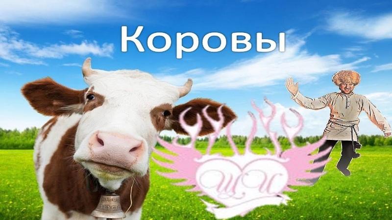 Лёха Баянист together group the Щи - Коровы
