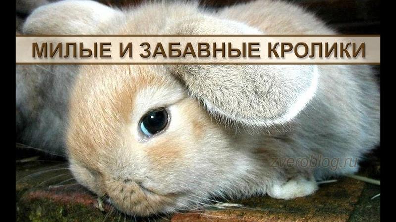 Декоративные кролики – милые и забавные домашние животные.