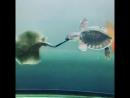 """""""Покатай меня большая черепаха"""" наоборот 😂"""