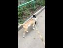 Мурка бывшии кот крикун