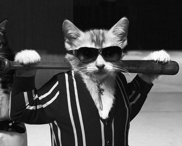 фото кот на аву