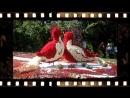 Цветочные скульптуры 2