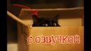 Приколы с котами и смешная озвучка животных – Ах эти коты и кошки от PSO