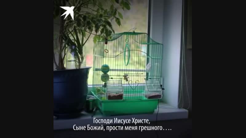 Молитвеный попугай