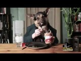 Собака завтракает в пиджаке