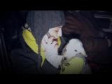 Перевозка животных - пытки перед казнью