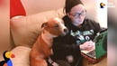 Dog Whose Photo Went Viral Has Sweetest Adoption Story RUSS UPDATE The Dodo