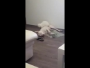 Собака, познавшая дзен)