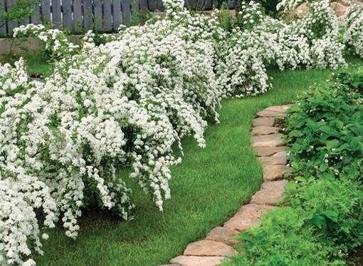 дамские сережки цветок фото