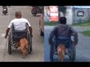 Трогательные кадры пес подталкивает инвалидную коляску хозяина помогая ему двигаться © Источник lemurov