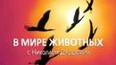 В мире животных с Николаем Дроздовым. Выпуск 32 2017