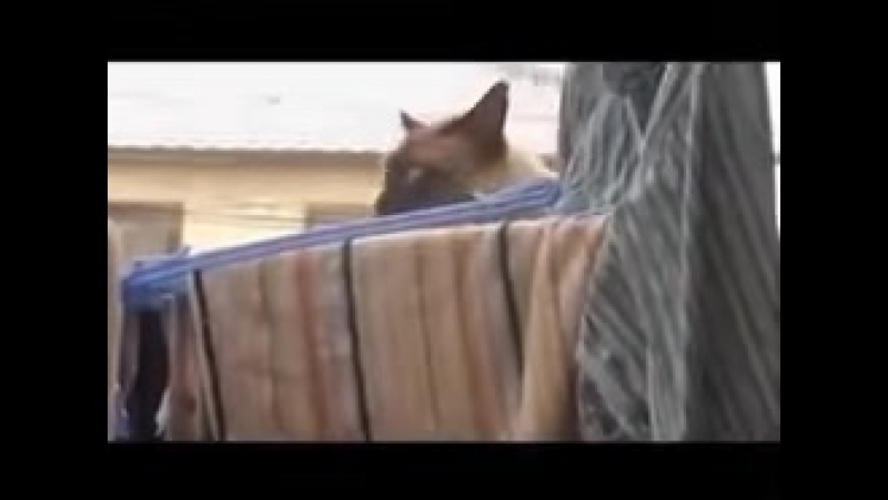 видео порн блондинка латинка мин рот губы жопа в России смачное мулатка рыжая юмор мусора