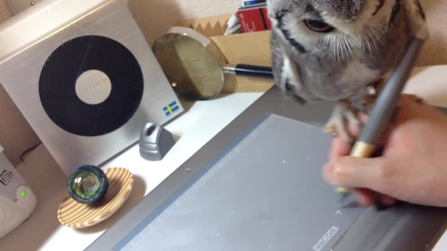 Northern White-faced Owl 'Helps' Guy Draw on Tablet