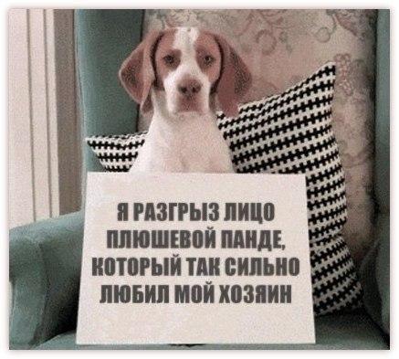 http://cs14101.vk.me/c7008/v7008076/2a49/IqkyaOebmUA.jpg