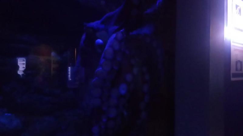 Океанариум Большой осьминог