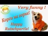 Very funny ! Корги на горке! Happy Rutschpertie! Смешное видео!