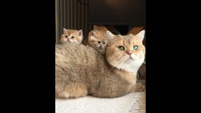 сидять ня сее у мами