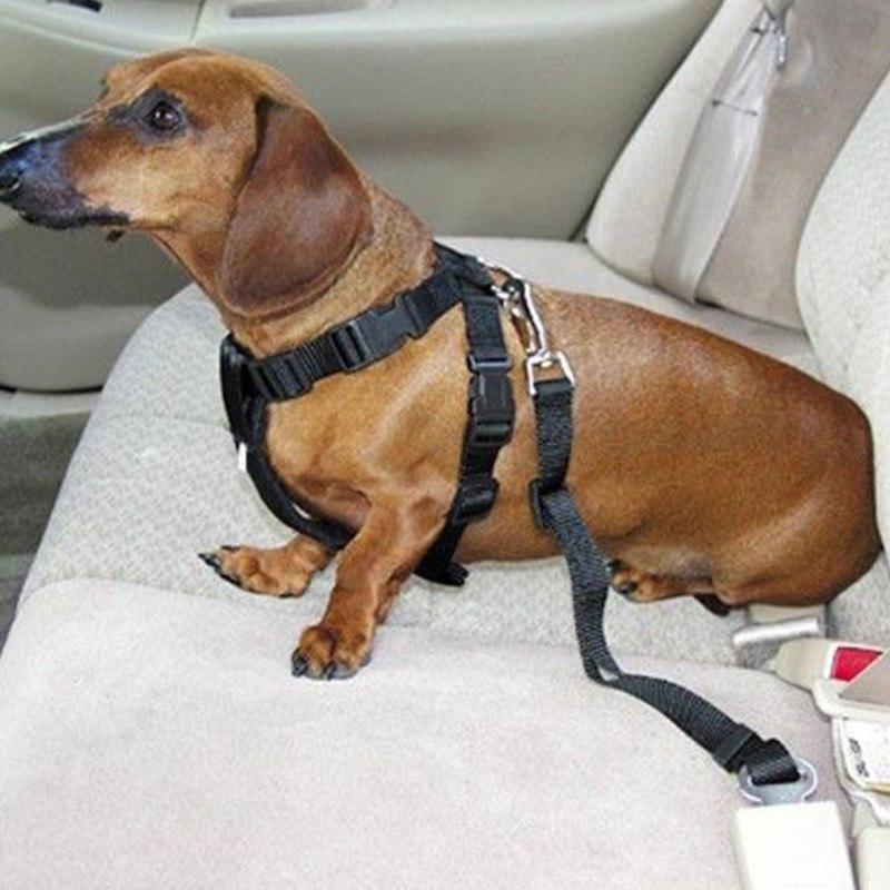 Ремень безопасности чтобы собака не бегала по салону 176