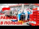 Высокооплачиваемая Работа в Польше на Курином Заводе