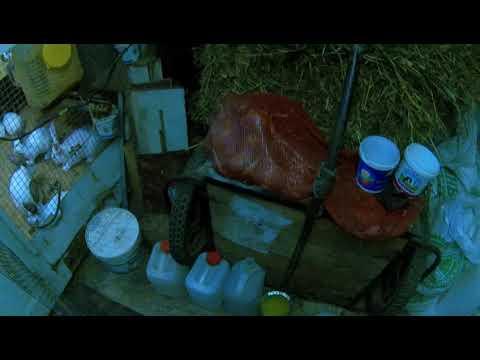 Уборка навоза у кроликов раз в 4 дня.Кормление и поение.