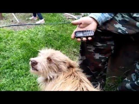 Пёс который обожает петь!
