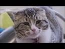 Моя адская кошка Зена
