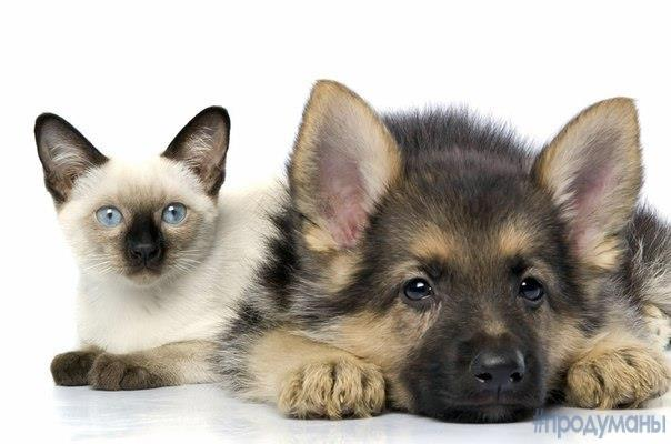Кто умнее, коты или собаки