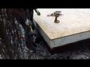 Завершили монтаж фундаментного бруса и SIP панелей перекрытия и наружных стен Монтируем балки чердачного перекрытия
