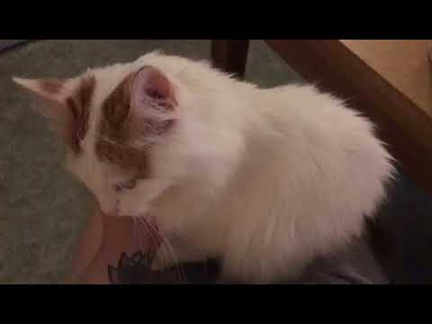 3437). 03.06.2018 - Кошка Вишенка уехала домой! (видео из дома)