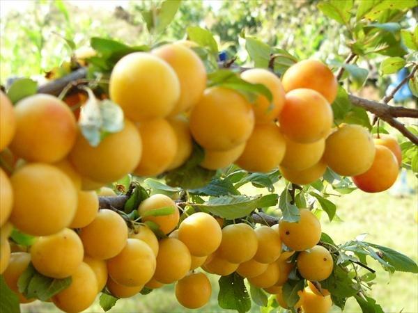 Степашин возлагает надежды на поставки фруктов и овощей из Палестины