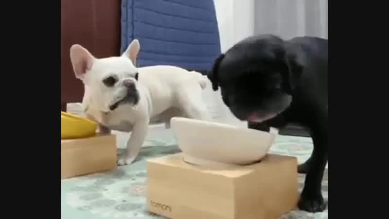 Его наверно кормят вкуснее...