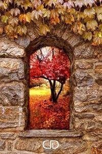 Отцвели цветы, падают листья, птицы молчат, лес пустеет и затихает.ОСЕНЬ. - Страница 6 015bYzO24tM