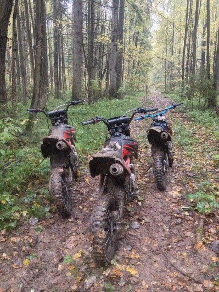 мы в лесу: