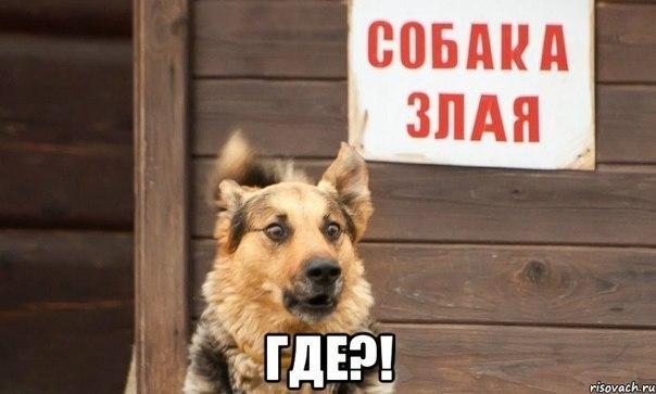 Всяко - разно 142 )))