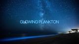 Glowing Luminous Plankton. Светящийся люминисцирующий планктон.