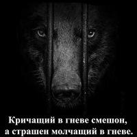 Анкета Александр Радченко