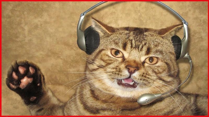 Коты поют МАКАРЕНА Приколы с котами и кошками 2018 Смешные коты и котики