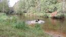 DSCN9016 Гут и Дива купаются в речке Вьюн, 31.08.2018