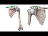 Медикаментозное лечение остеохондроза отзывы
