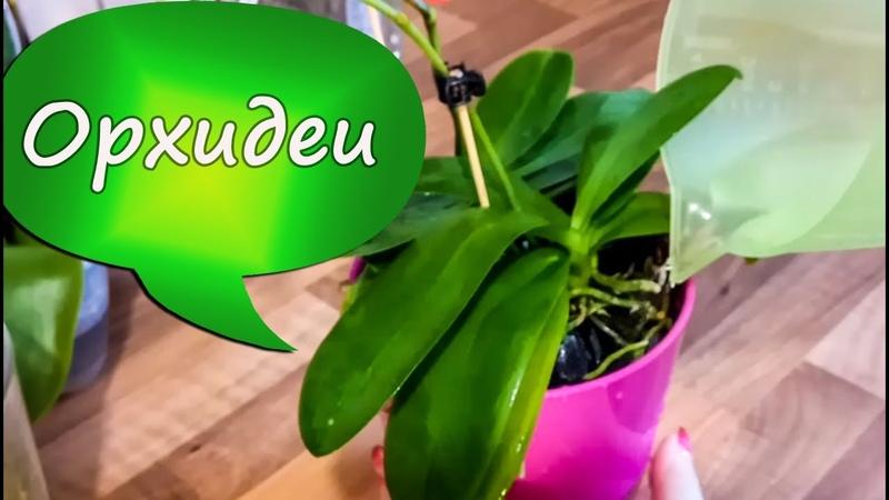 19. Полив и удобрение орхидей в пенопласте! Мой уход за орхидеями при сухом содержании