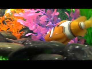 Аквариумные рыбки-роботы