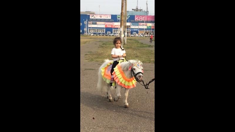 Любим пони)