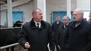 Это же Освенцим Лукашенко в коровнике уволил губернатора Могилевской области