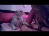 Кот,который любит целоваться