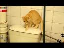 01 2 Мой Кот - идиот подборка