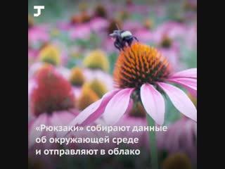 Учёные превратили живых пчёл в дроны