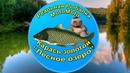 Как поймать Золотого карася на Лесном озере Реальная рыбалка