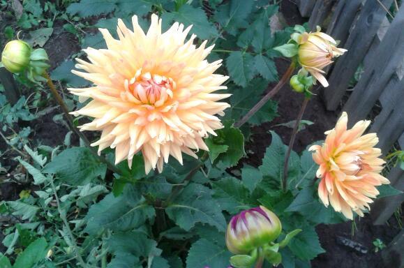Цветы у Ликки OKMw7Ssic0c
