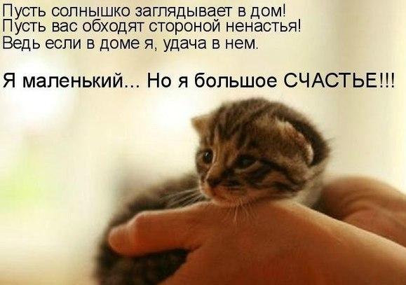 http://cs315126.vk.me/v315126402/6b9f/DtMrVMTpjPU.jpg