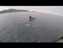 Северные дельфины _ Неописуемое зрелище _ Northern dolphins _ Indescribable sigh